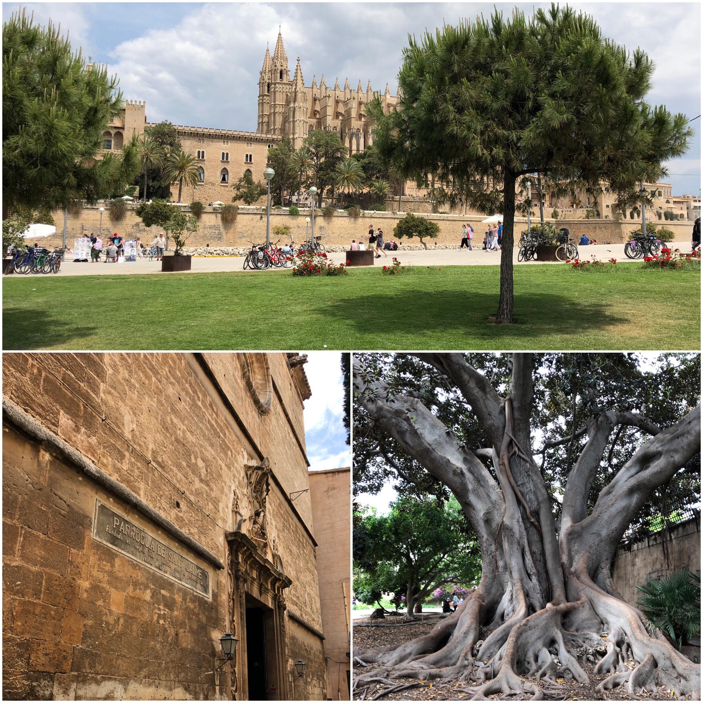 In Palma de Mallorca habe ich drei Geocaches gesucht und gefunden.  Ansonsten ist die Altstadt immer wieder einen Besuch wert. 1b2257a07e6